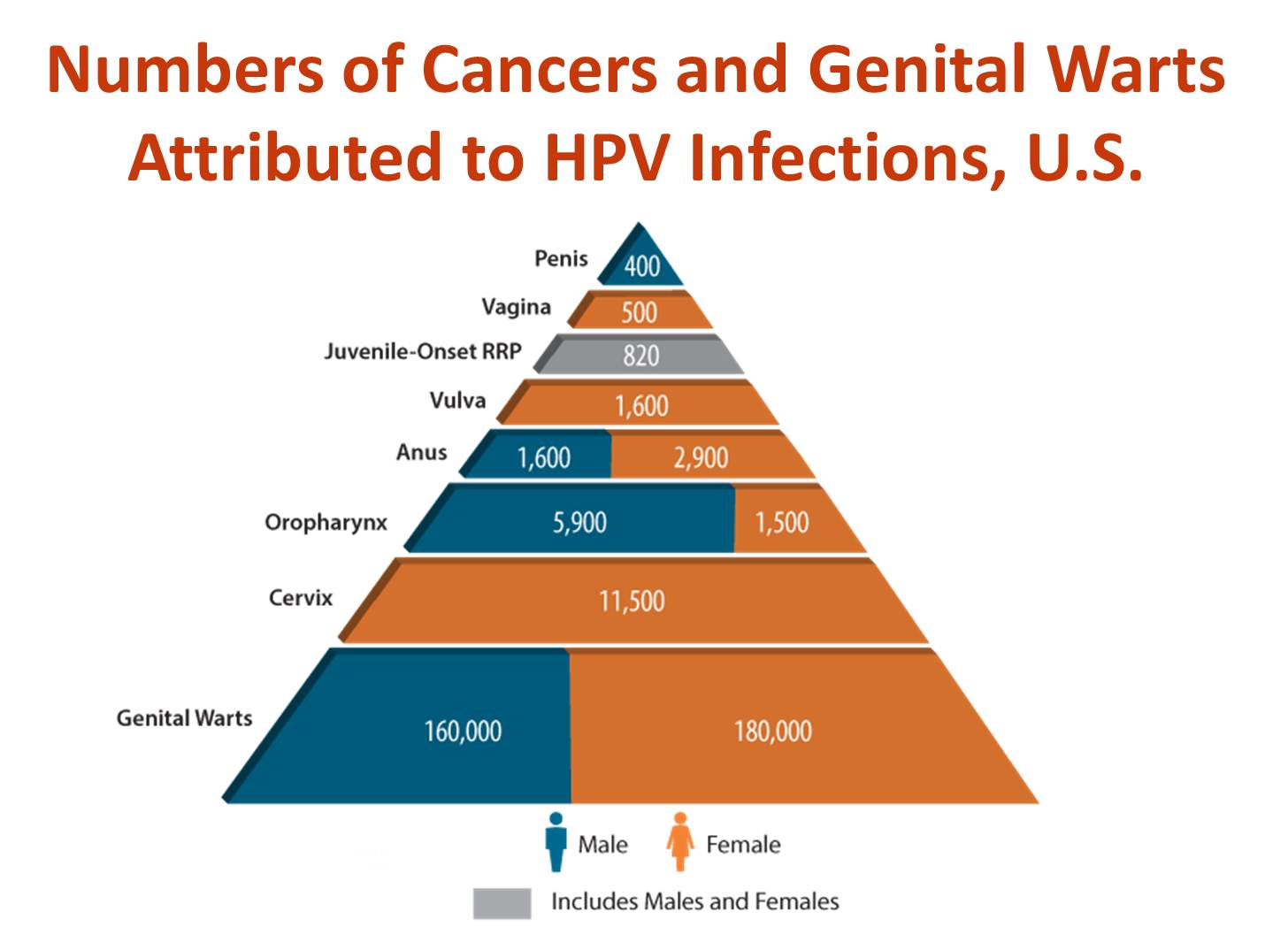 hpv epidemiology triangle